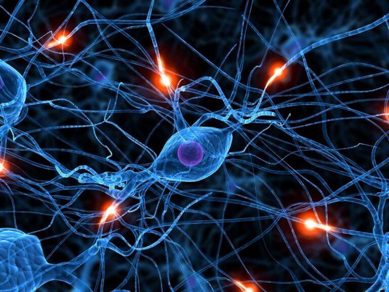 ماهو علم الاعصاب : ماهي الأمراض العصبية وأعراضها