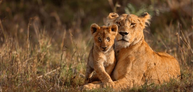 خصائص الثدييات : مخلوقات مذهلة تشاركنا نفس الكوكب
