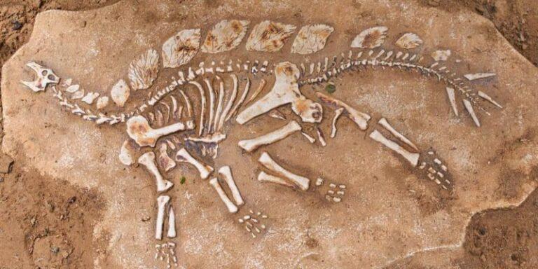ما هو علم الحفريات وما أهميته في إكتشاف تاريخ كوكبنا