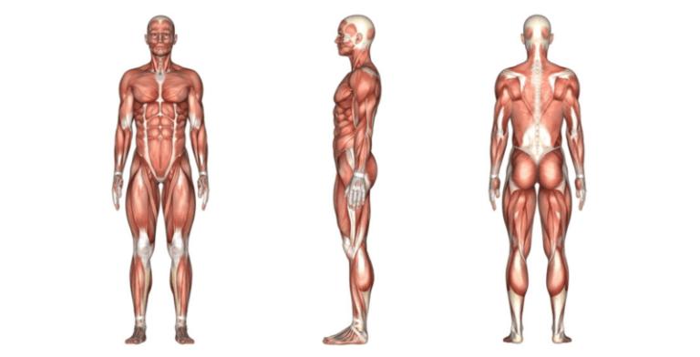 أسرار علم التشريح : كيف ساعدنا على فهم جسم الإنسان