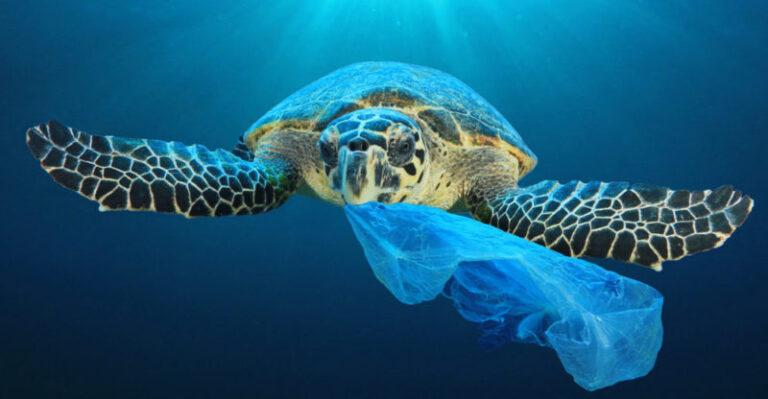 ظاهرة التلوث البيئي : الخطر الذي يهدد كل أشكال الحياة